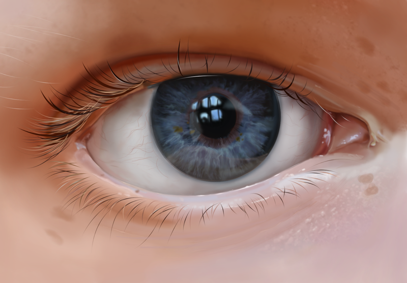 Study of the Eye